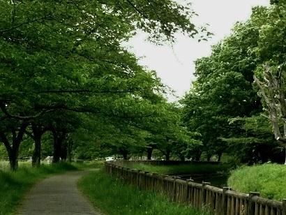 見沼用水散歩道.jpg