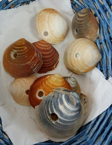 貝の戦い.jpg
