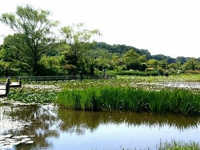 IMG_20170521_152306清水公園池.jpg