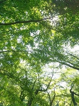 IMG_20170521_212914清水公園樹木.jpg